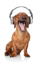 Dog w Headphones dreamstime_m_21611129 (2)
