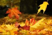 Falling Leaves dreamstime_11646793 (2)