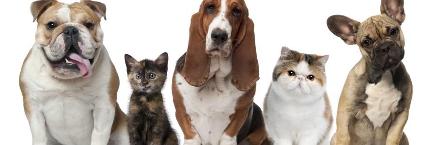 May – National Pet Week
