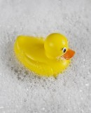 Rubber Ducky dreamstime_m_19349163 (2)